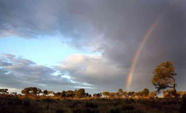 Kruger National Park by Barbara Eckstein