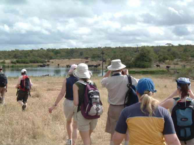 Greater Kruger Walking Safaris by