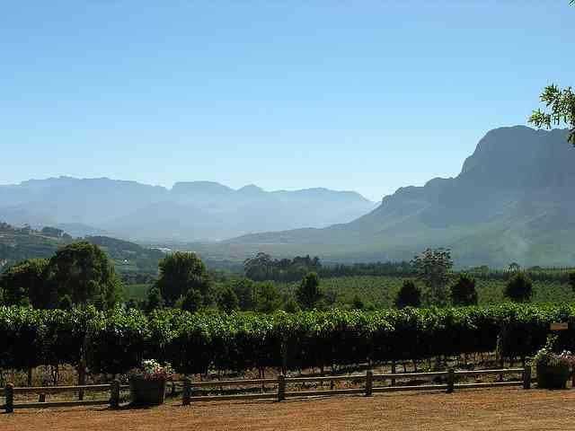 Cape Winelands by Chris Eason