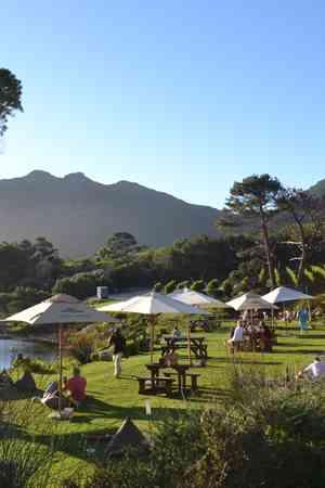 Cape Point Vineyard
