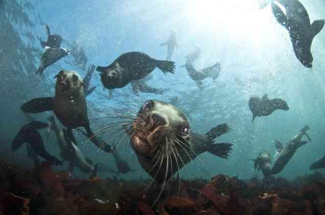 Animal Ocean