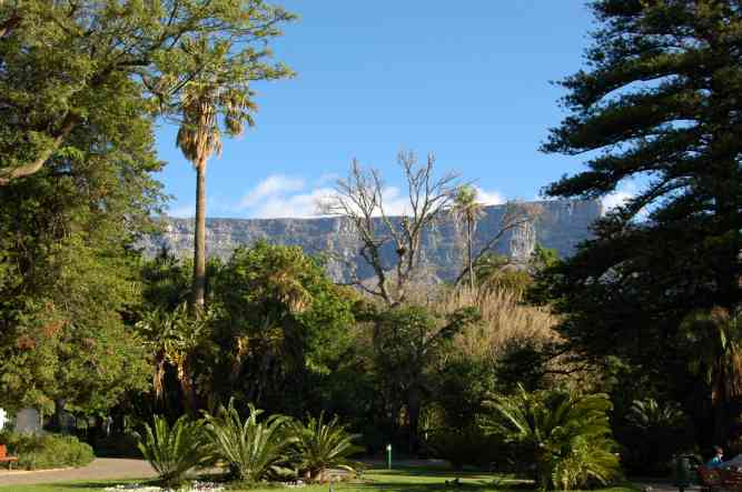 Cape Town Company Gardens by Monica Kaneko