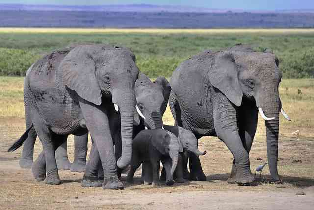 Elephant by Diana Robinson