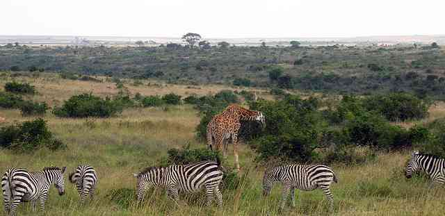 Safari by teakwood