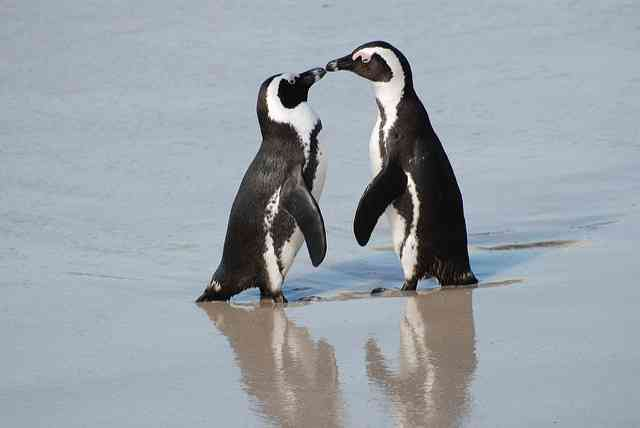 Penguins caring by Paul Mannix