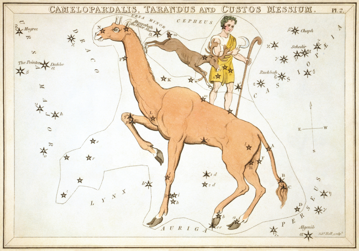 Camelopardalis as depicted in Urania's Mirror, a set of constellation cards published in London c.1825