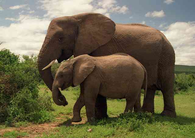 Addo National Park elephants by Brian Snelson