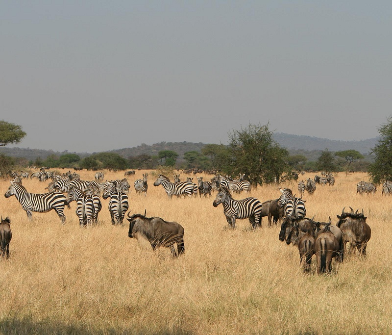 Our Top Nine African Safari Itineraries | African Budget Safaris