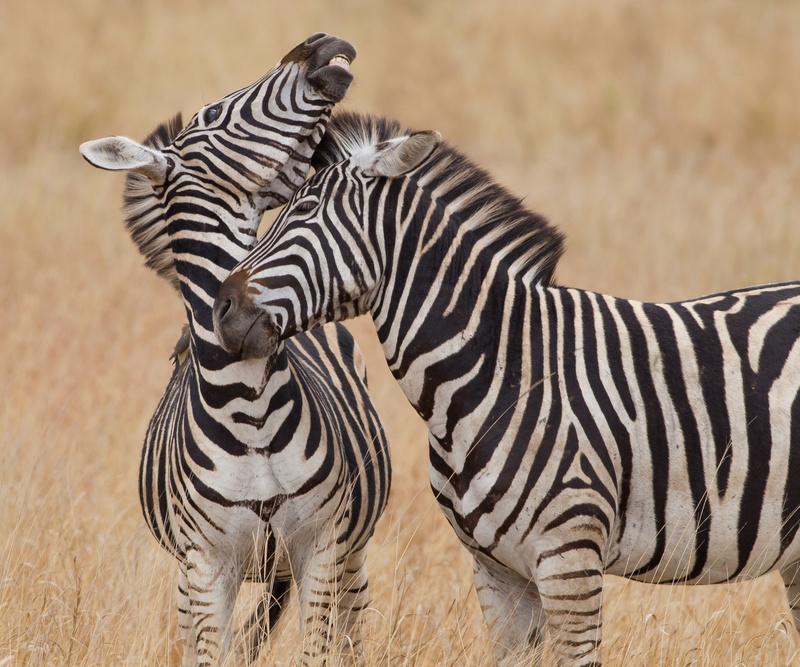 Our Top Nine African Safari Itineraries | African Budget Safaris
