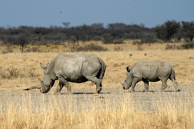 Khama Rhino Sanctuary, Botswana by Cory Catts