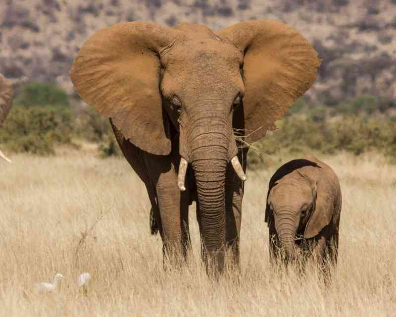 Best Places to See Elephants in Africa: Elephant Safaris 2020