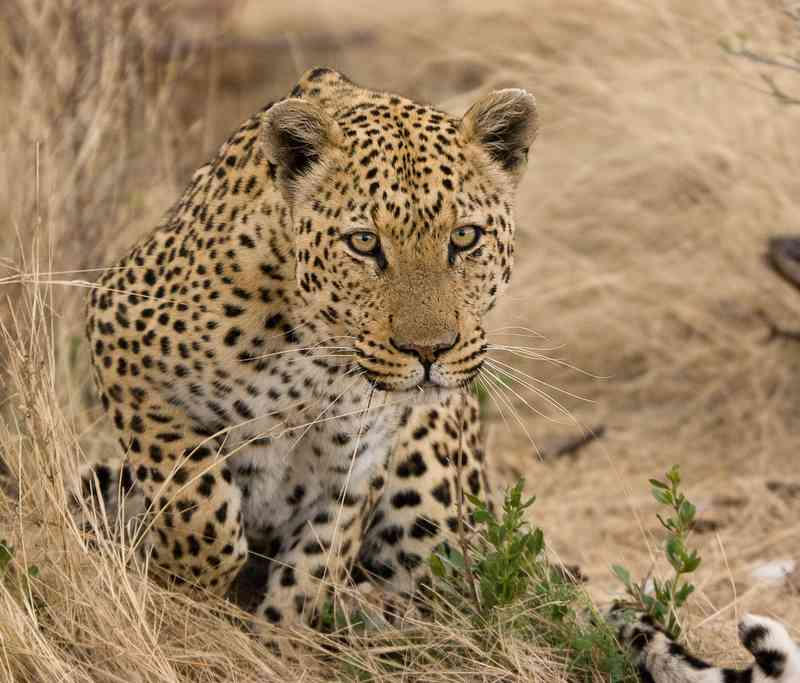 Africa's Big Five Facts - about Big Five animals of Africa