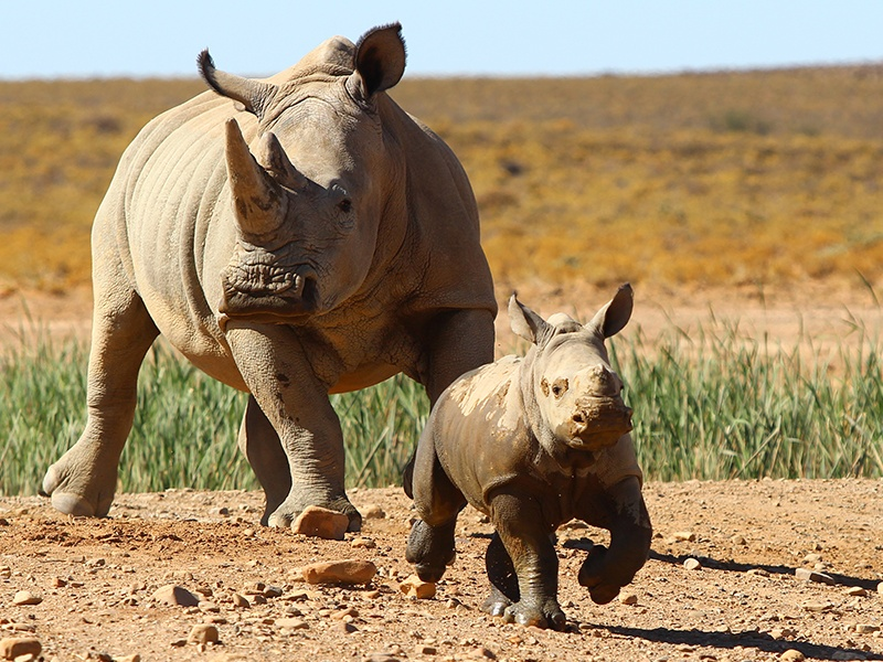 Cape Town Safaris: See the Big Five only 2 Hours from the City