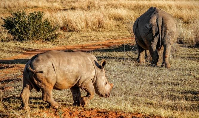 Rhino by Fyre Mael