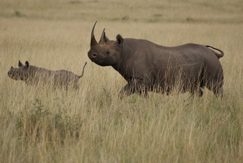 Endangered Animals in Africa - Rare & Endangered Wildlife ...