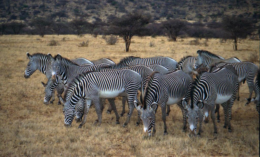 endangered animals in africa essays