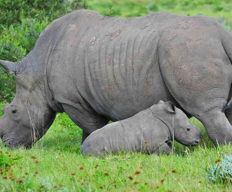 endangered animals in africa essays Click on the species name to view its profile click on a species groups (mammals, reptiles, etc) from the menu above to see more endangered creatures in africa.