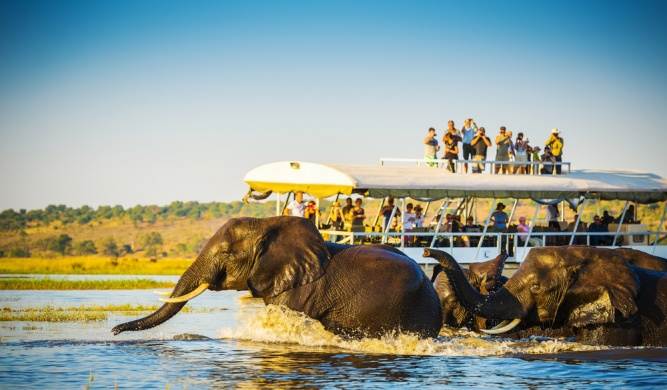 Elephants crossing the Chobe River by