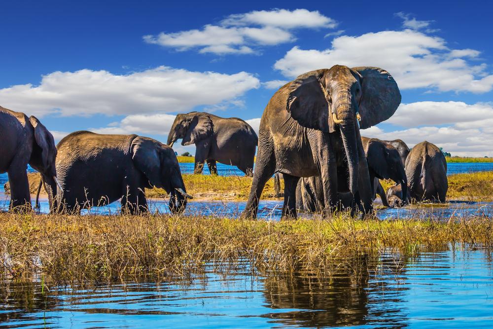 Five Best African River Safari Destinations - Chobe river