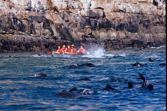 Dolphin Adventures