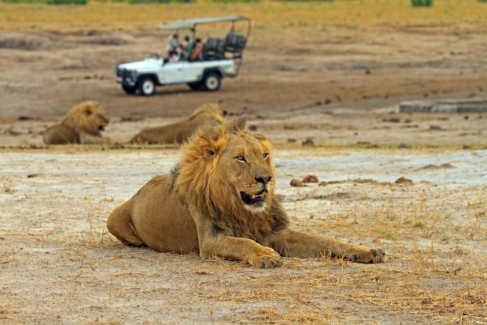 lion park resort botswana