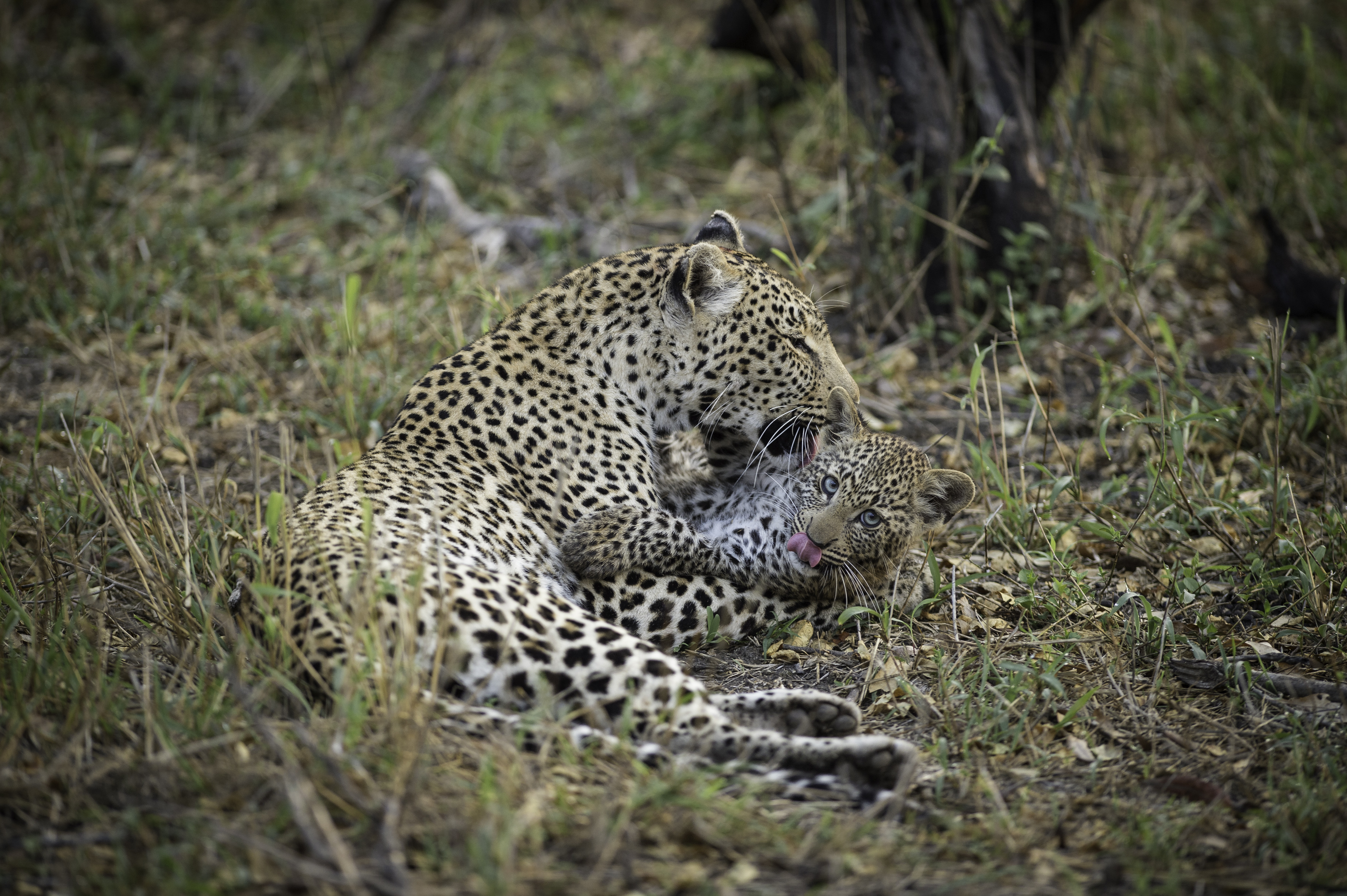 Africa's Best National Parks in 7 Top African Safari Countries