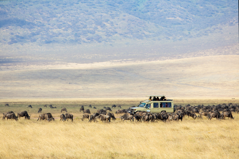 What is an African Safari? Safaris in Africa Explained