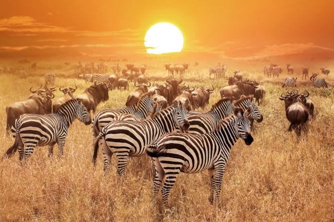 Sunset in the Serengeti by