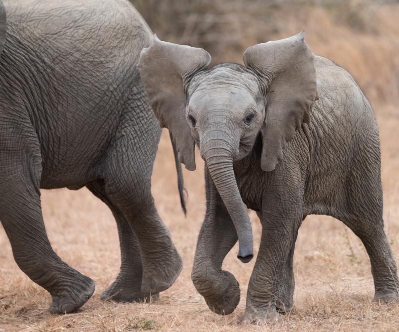 Elephant Travel Insurance Reviews