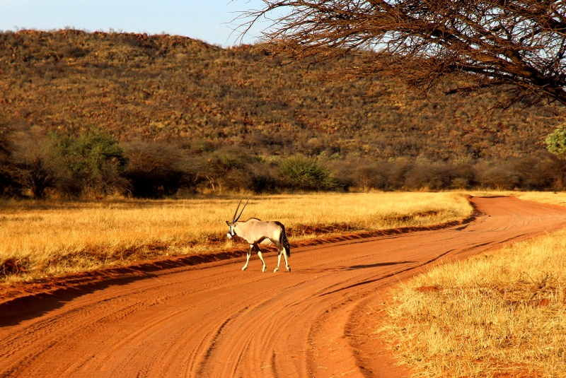 Namibia Game Reserve Grand Tour