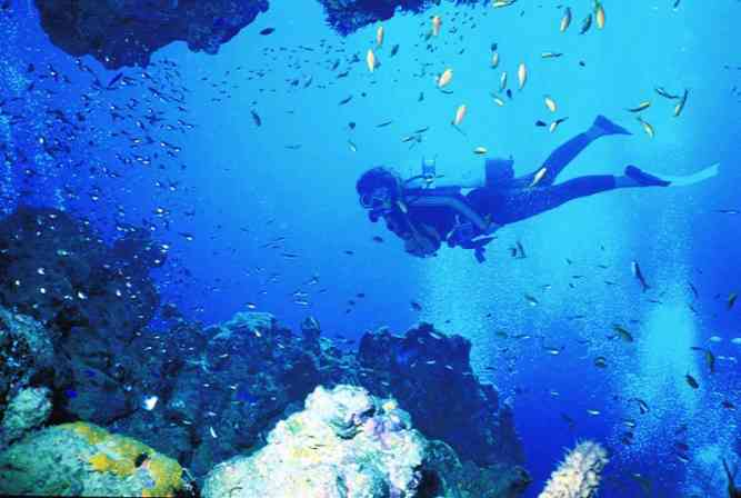 Scuba Diving Cape Town by Cape Town Tourism