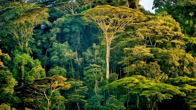 Afromontane forest by