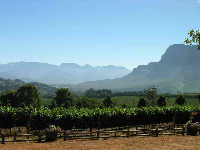 Cape Winelands by Chris Eason