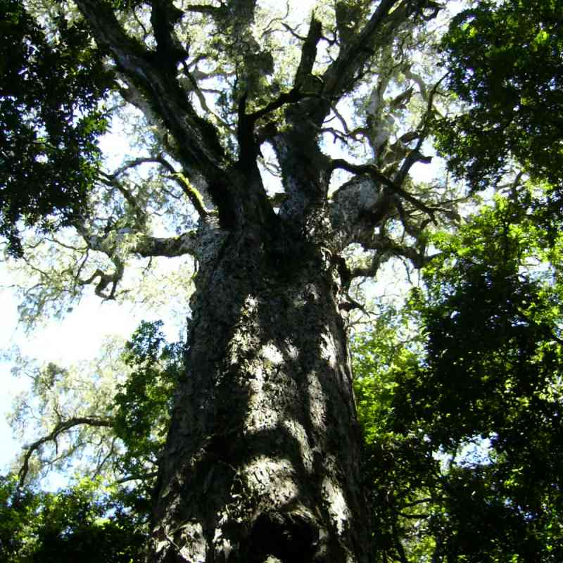 Hogsback - Tolkien's Middle Earth in the Amathole Mountains?