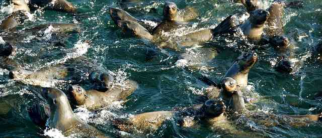 Town And Country Insurance >> The Marine Big 5 - South Africa's Top Sea Life