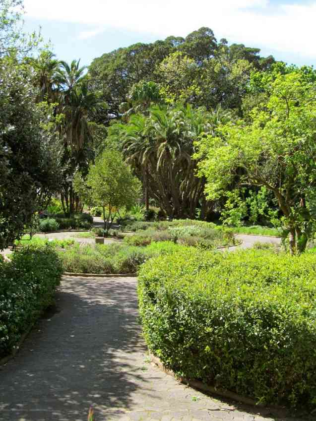 The Company S Garden Cape Town Art History Stars And