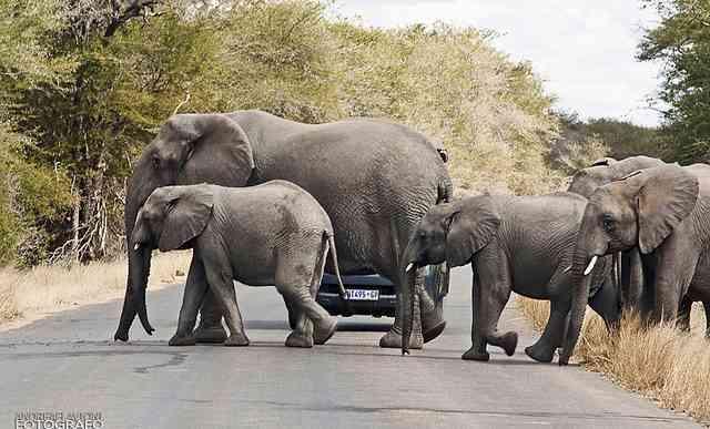 Is Greater Kruger National Park better than Kruger ...
