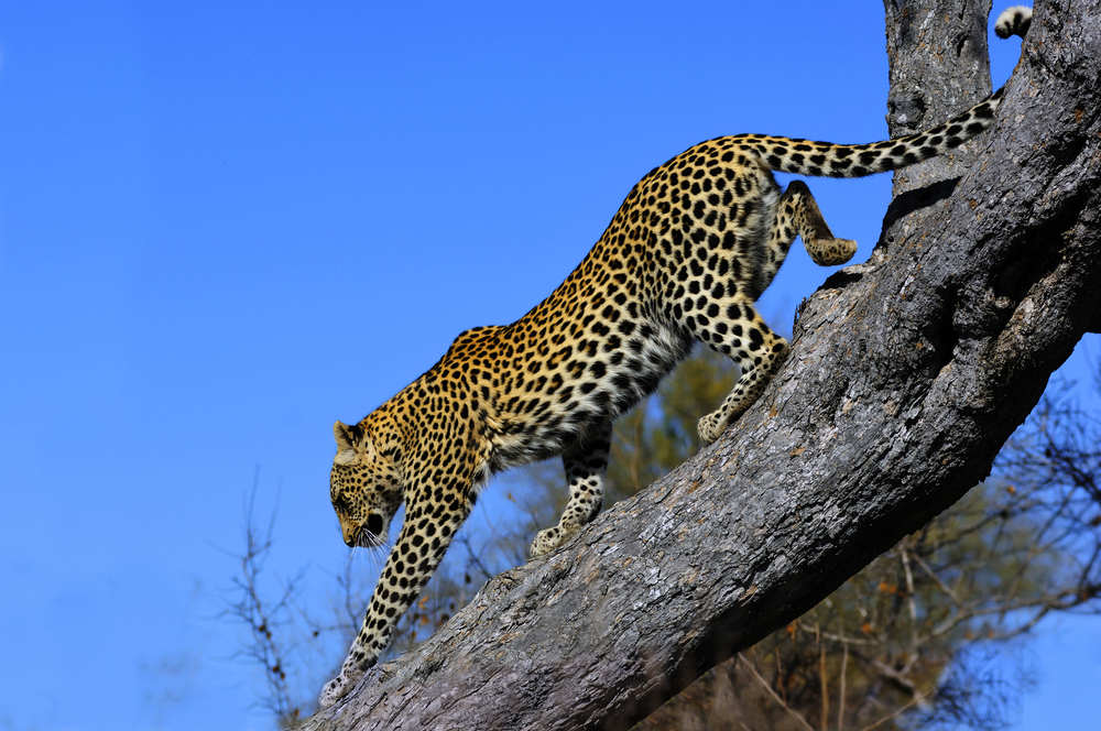 Breaking Down the Greater Kruger National Park
