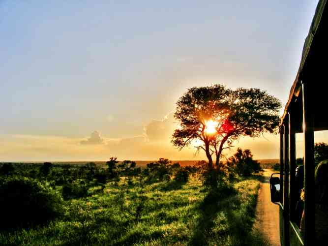 Sunset Game Drive in the Kruger by