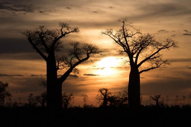 Daniel De Lapelin Dumont, African Budget Safaris
