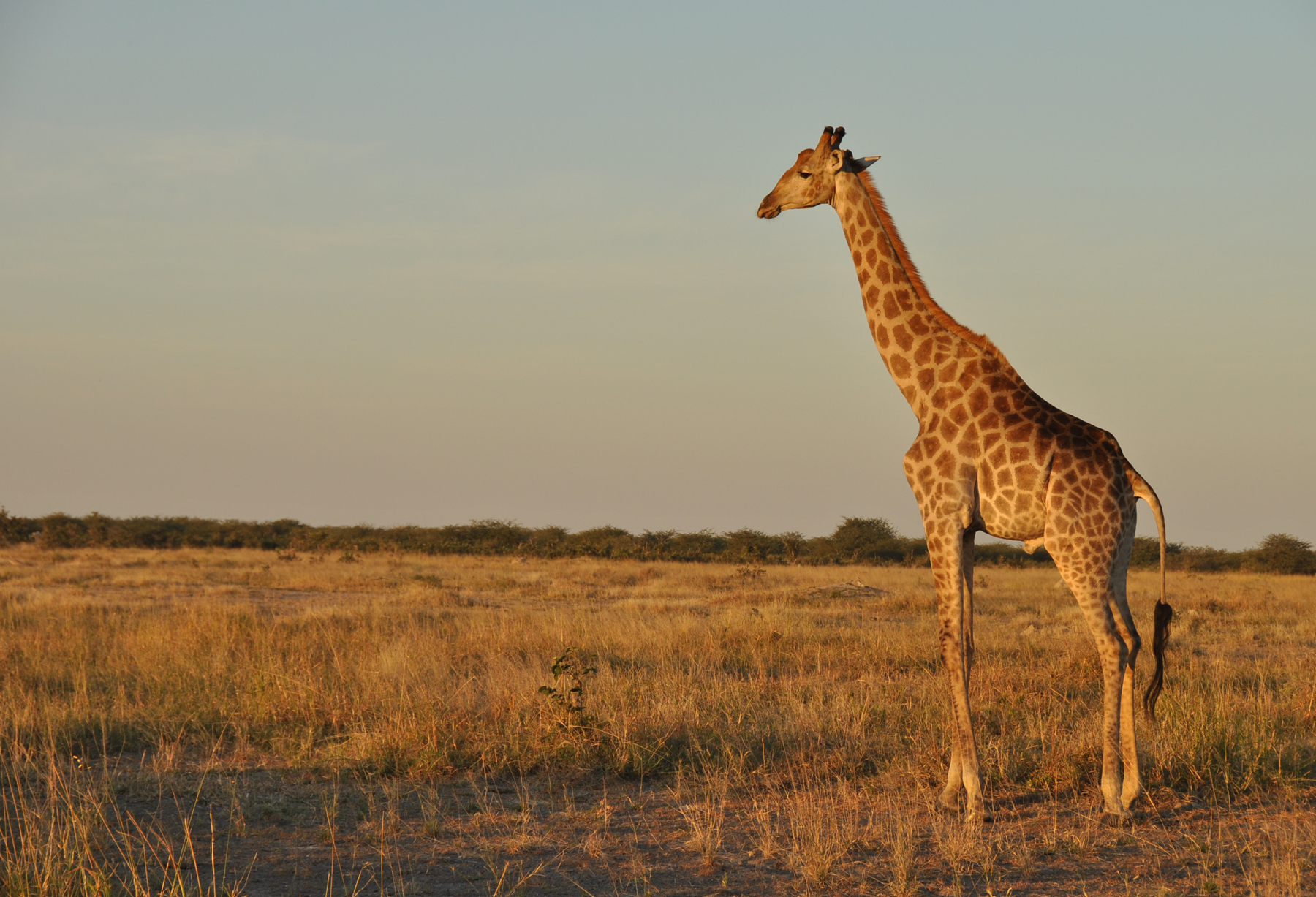 Our Botswana Safari Experience Review of Kalahari, Okavango