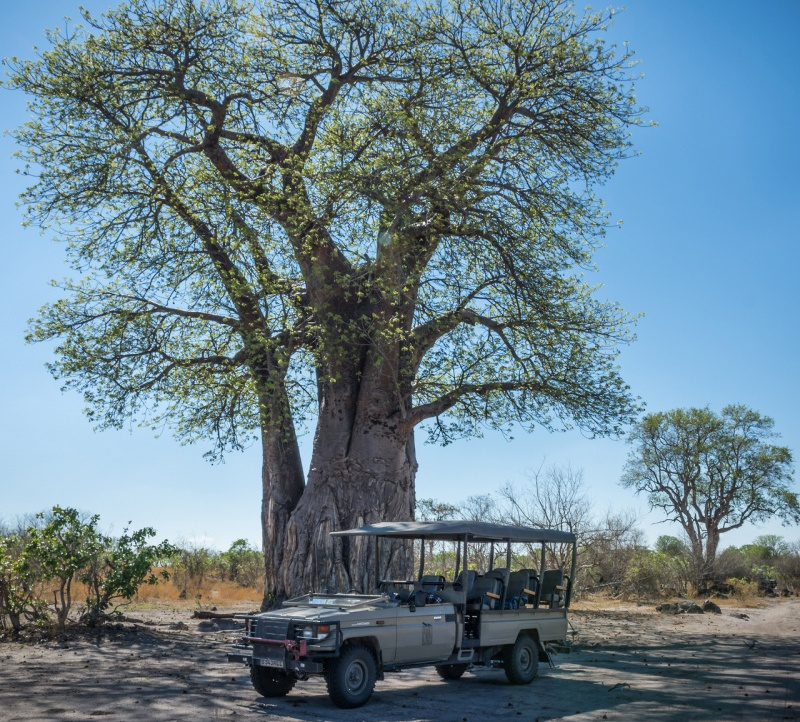 African Safaris for Seniors - Advice for Senior Travel