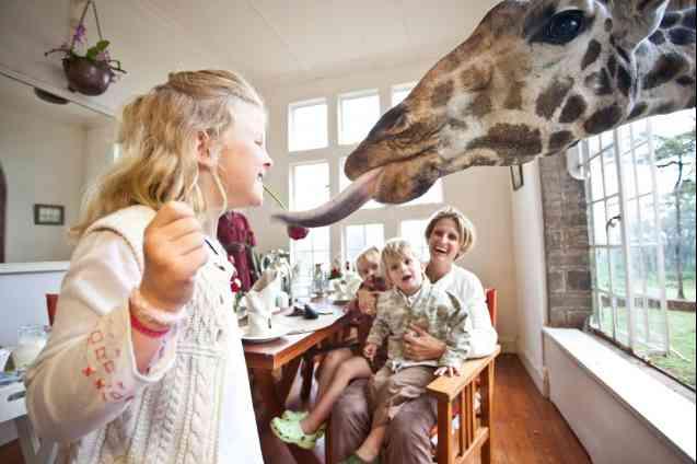 The Safari Collection