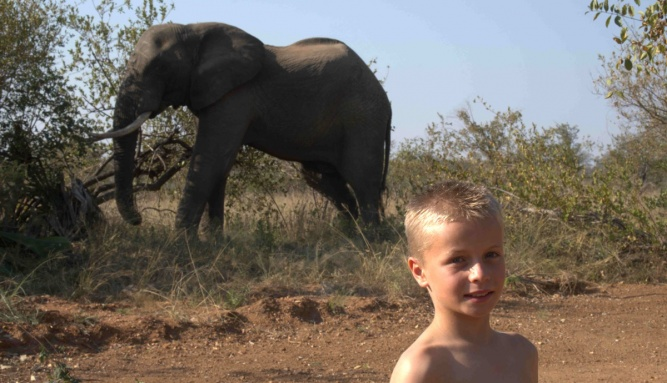Childrens safari kid with elephant by