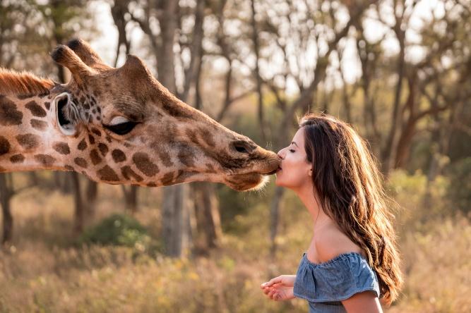 Friendly kisses  by Giraffe Manor