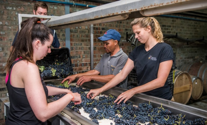 South Africa Wine Guide 2019 - Cape Winelands One Page Guide