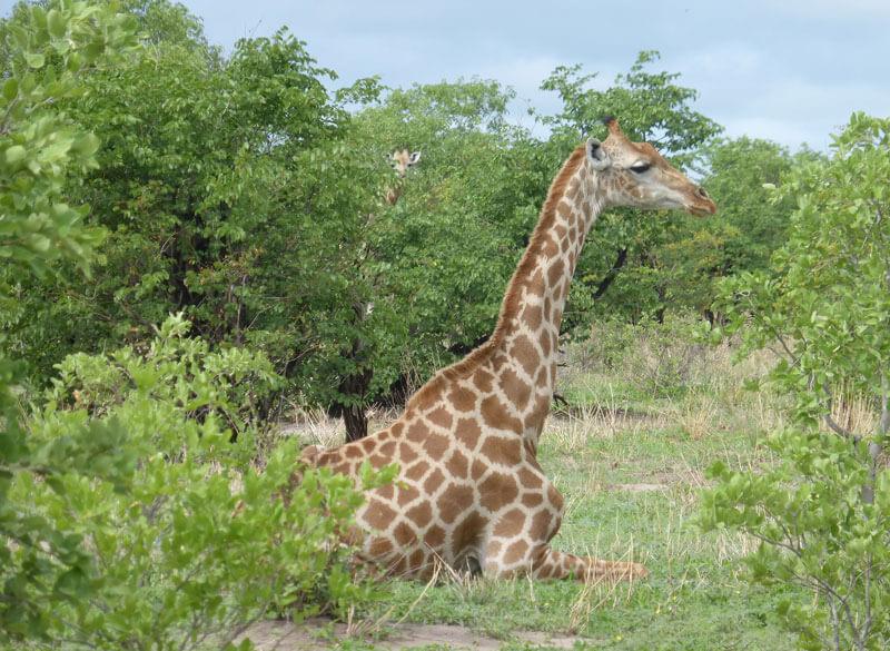 Serengeti Jungle Safari Zoo Animals Monkey Lion Giraffe Bah Towel 2 Pc Set Green